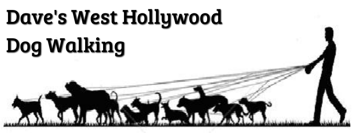 Dave's Dog Walking - West Hollywood
